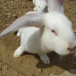 Rabbit Conversion Holes