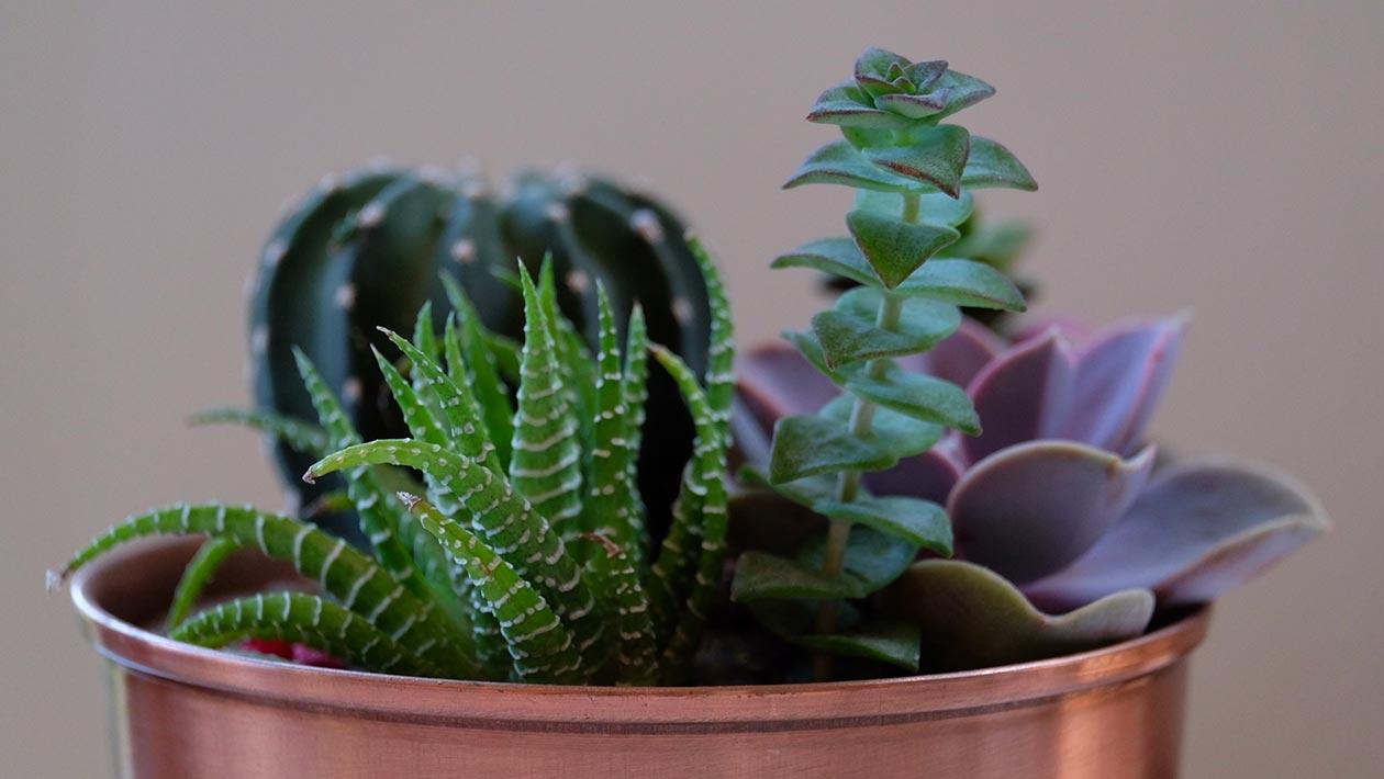 mastermind plants