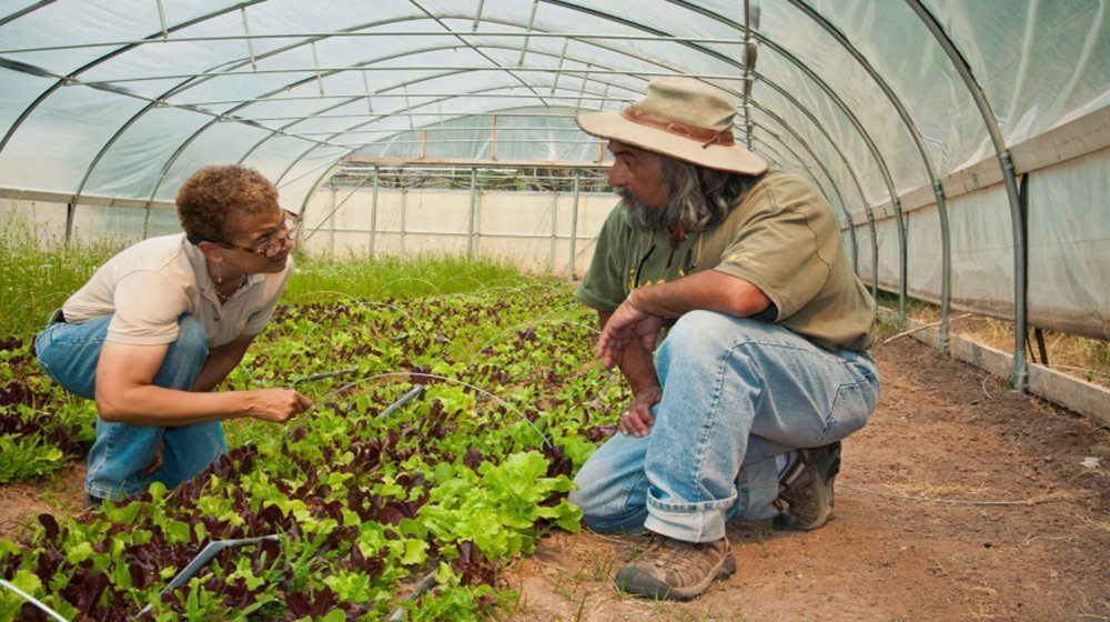 USDA Launches Mentorship Initiative to Help Farms, Ranches and Local Rural Businesses