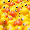 Rubber Ducking – WebDevStudios