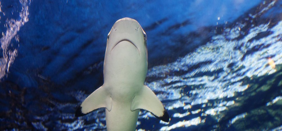 Learn What It Takes to Win On Shark Tank (From the Sharks themselves)