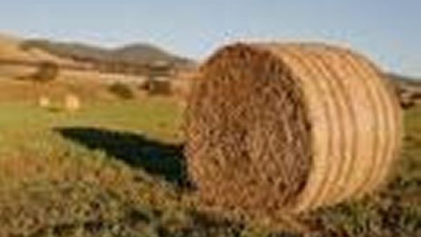 BaledHayForSale.com - Do You Sell Hay? This Domain Name is for sale - cheap.