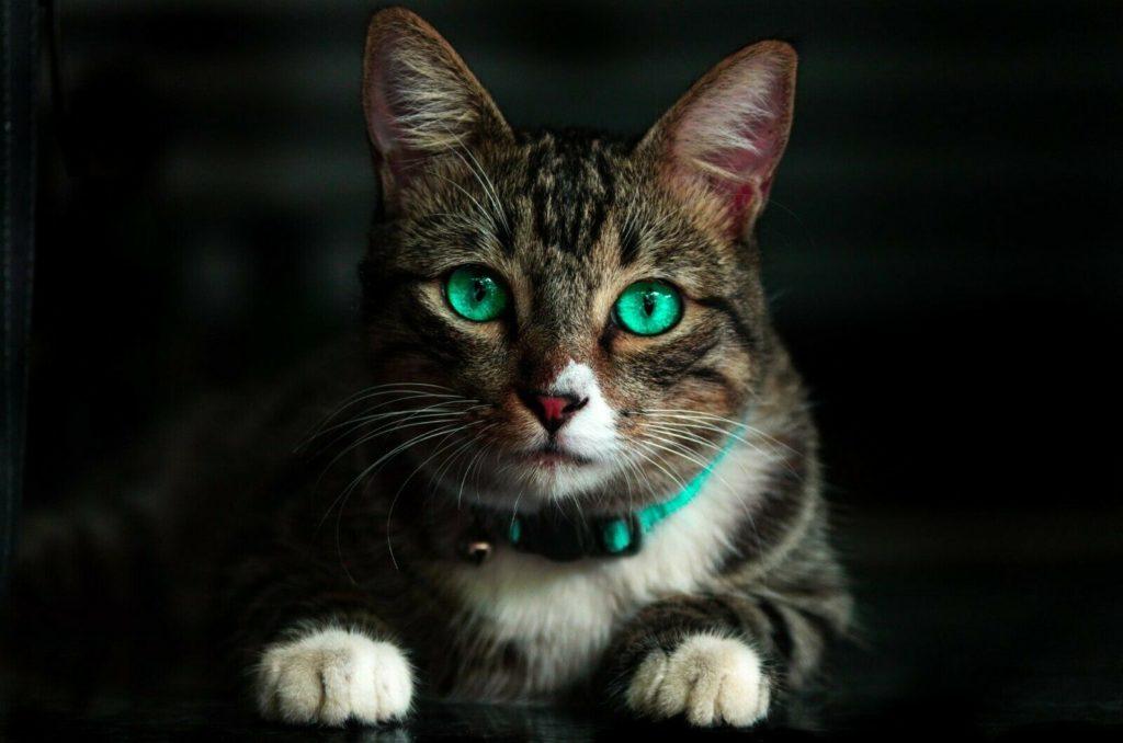 Cat Accessories/Toys Dropshipping Website Shopify Business- Huge Profit Per Sale