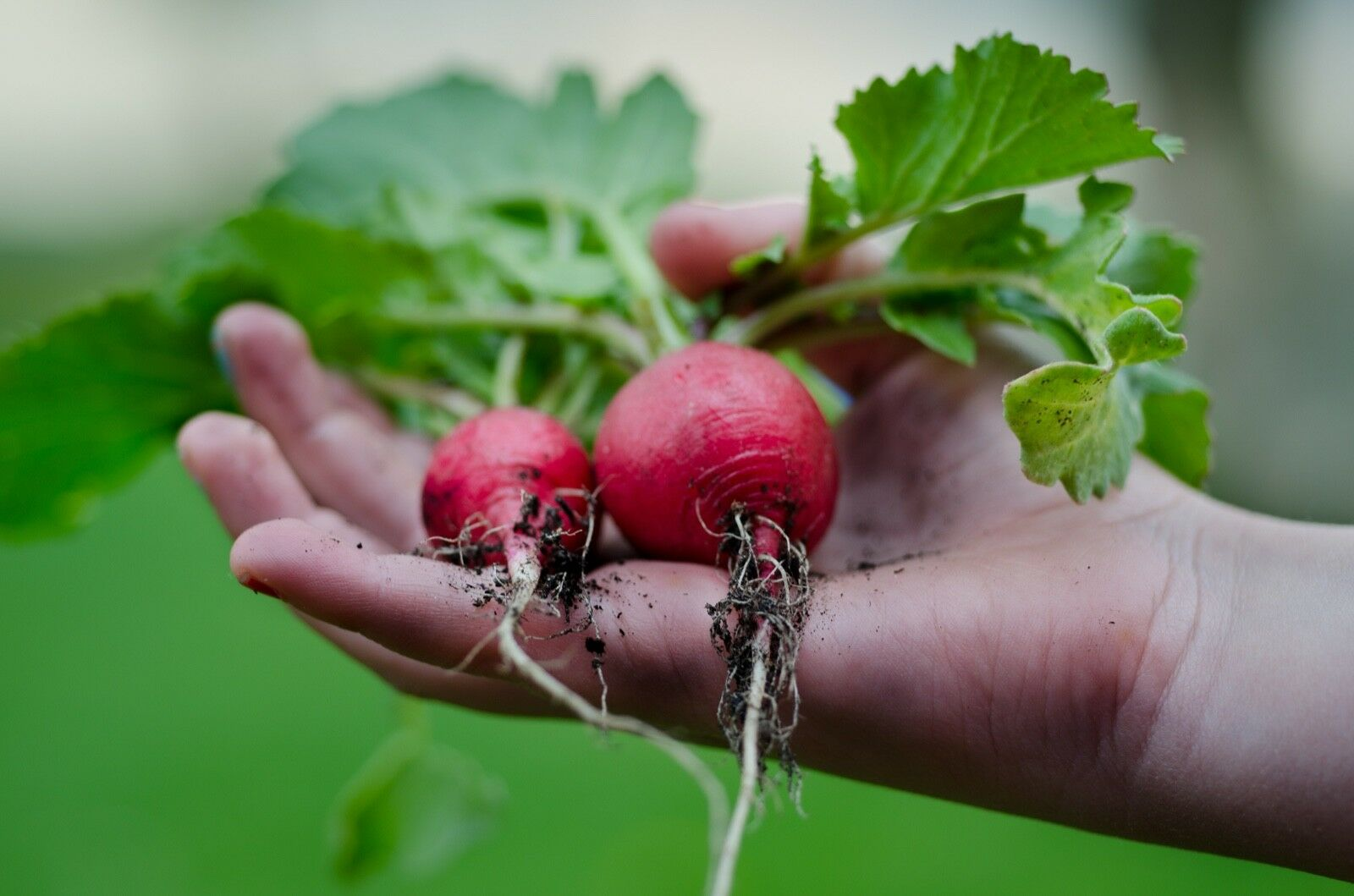 Fully Turnkey Gardening Dropshipping website stocked business ready to go!