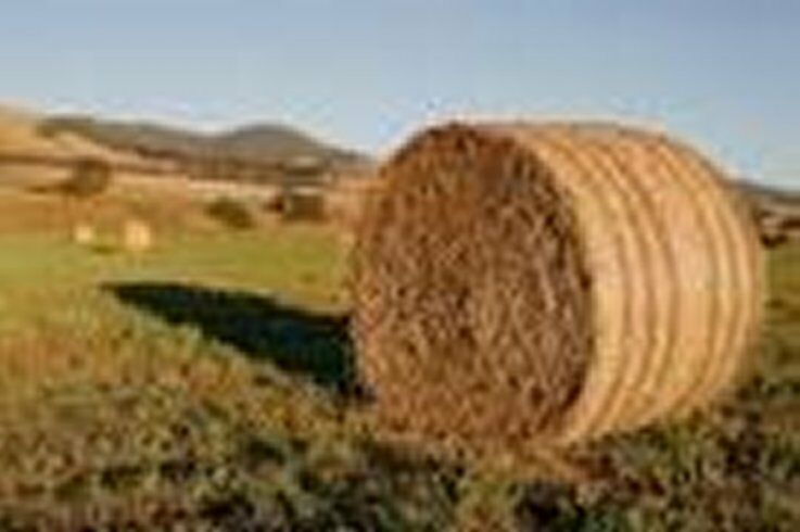 HayandFeedForSale.com - Hay and/or Feed For Sale. This Domain Name is for sale.