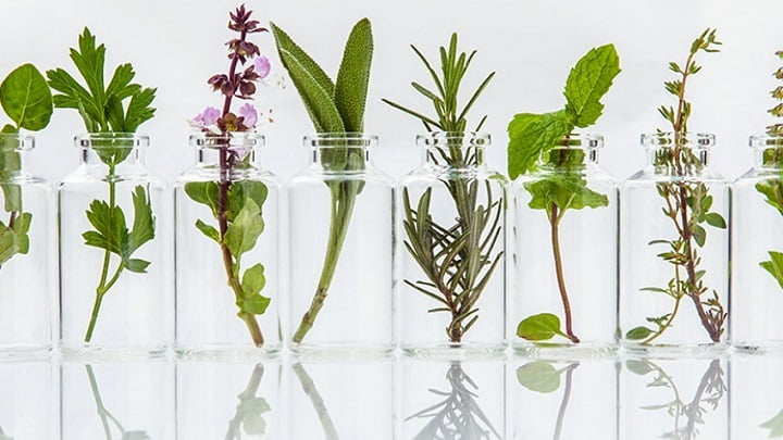 Global Botanical Extracts Market
